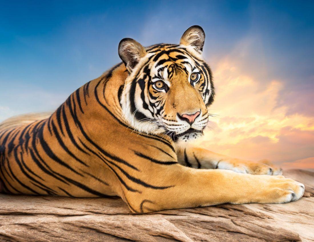 Тигр 3-149