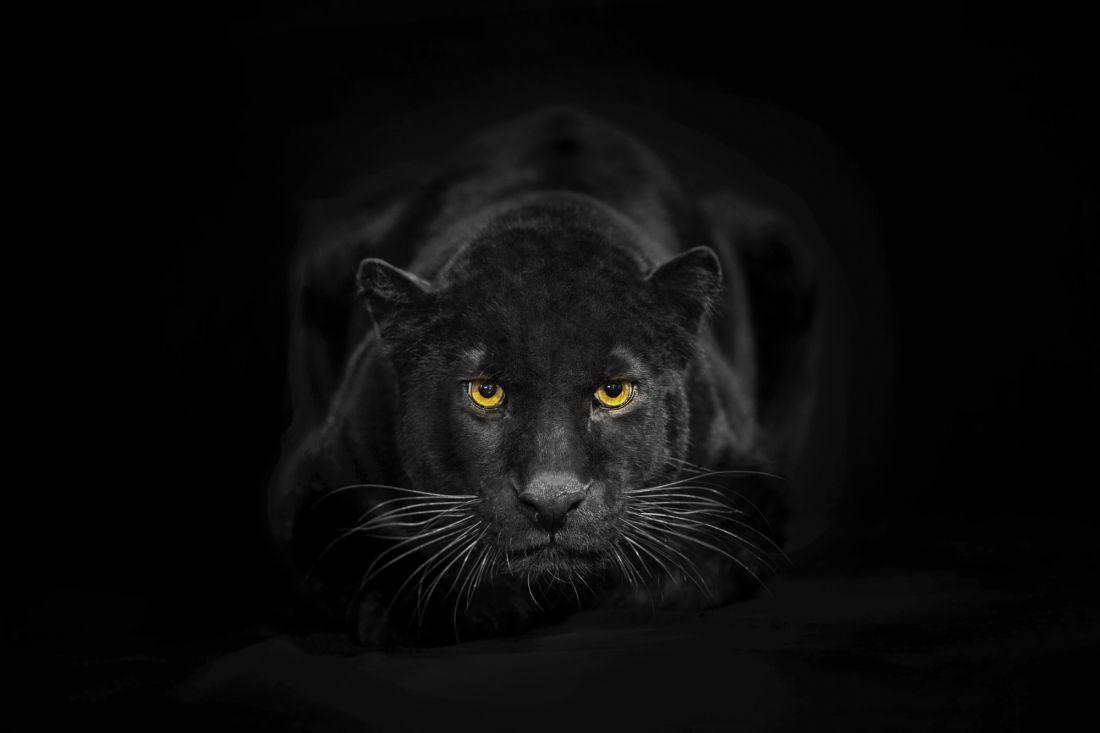 Пантера 3-118
