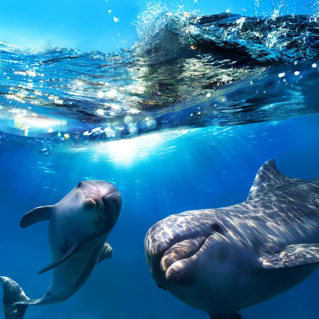 Дельфины 3-070