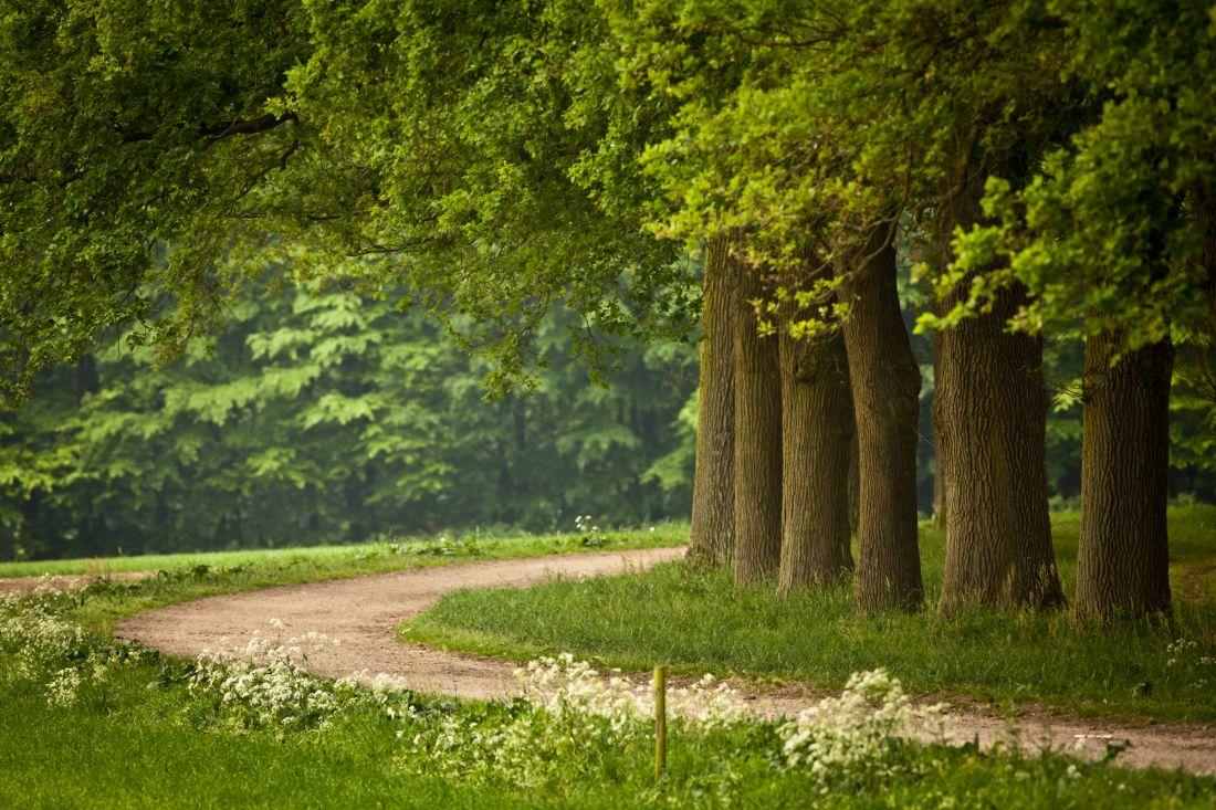 Деревья у тропинки 10-106
