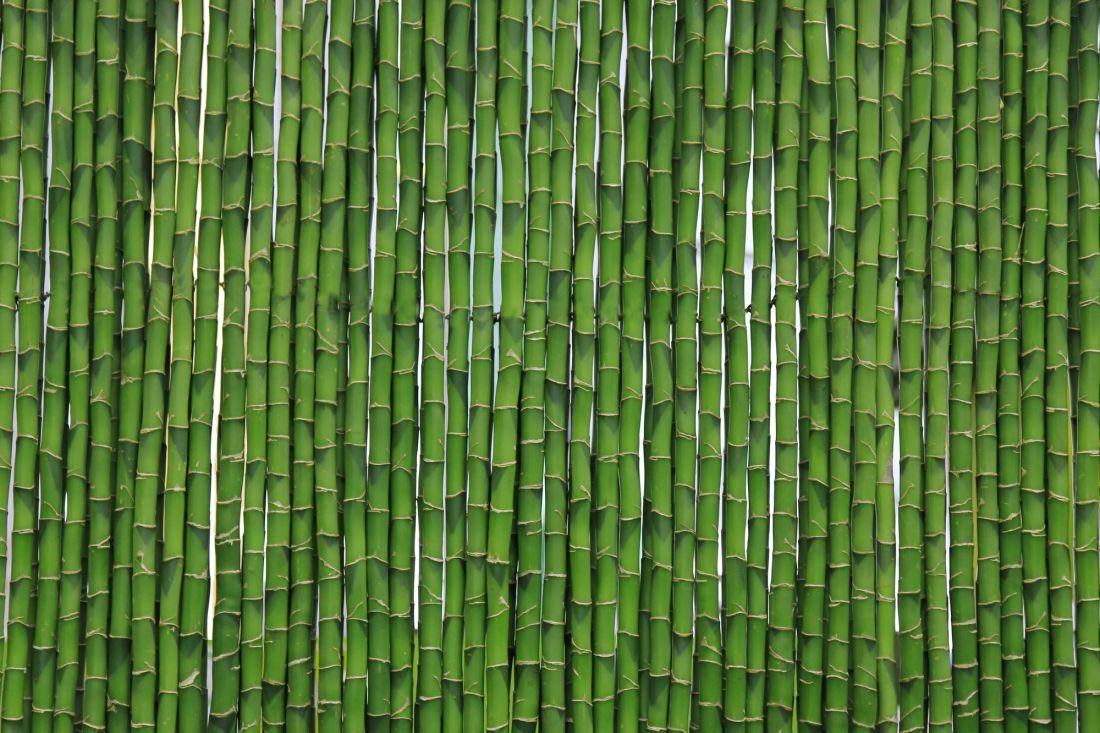 Бамбук 10-226