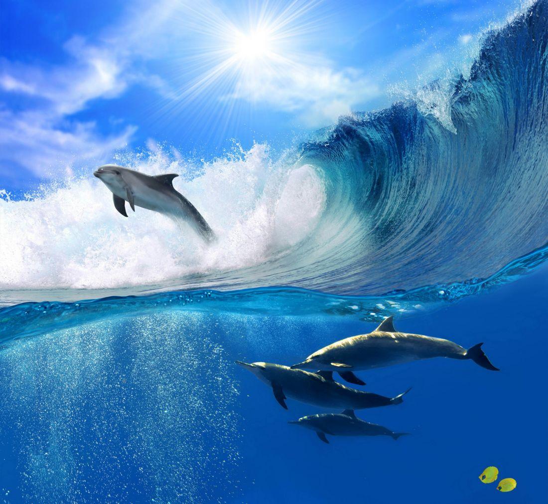Дельфины 3017-М