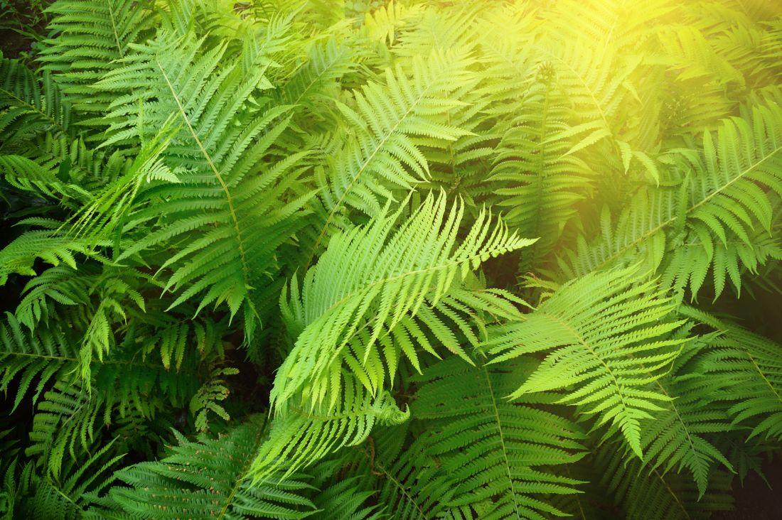 Пальмовые ветки 10-164