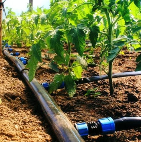 Поливочная система Капелька, 50 м - оптимальное решение, при котором вода равномерно поступает непосредственно к корням растений.