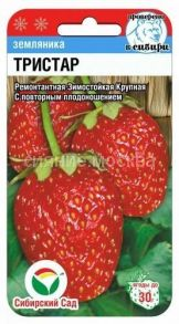 Земляника Тристар (Сибирский Сад)