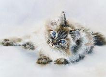 Почтовая открытка Акварельные котики 6