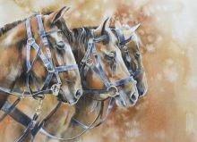 Почтовая открытка Лошади