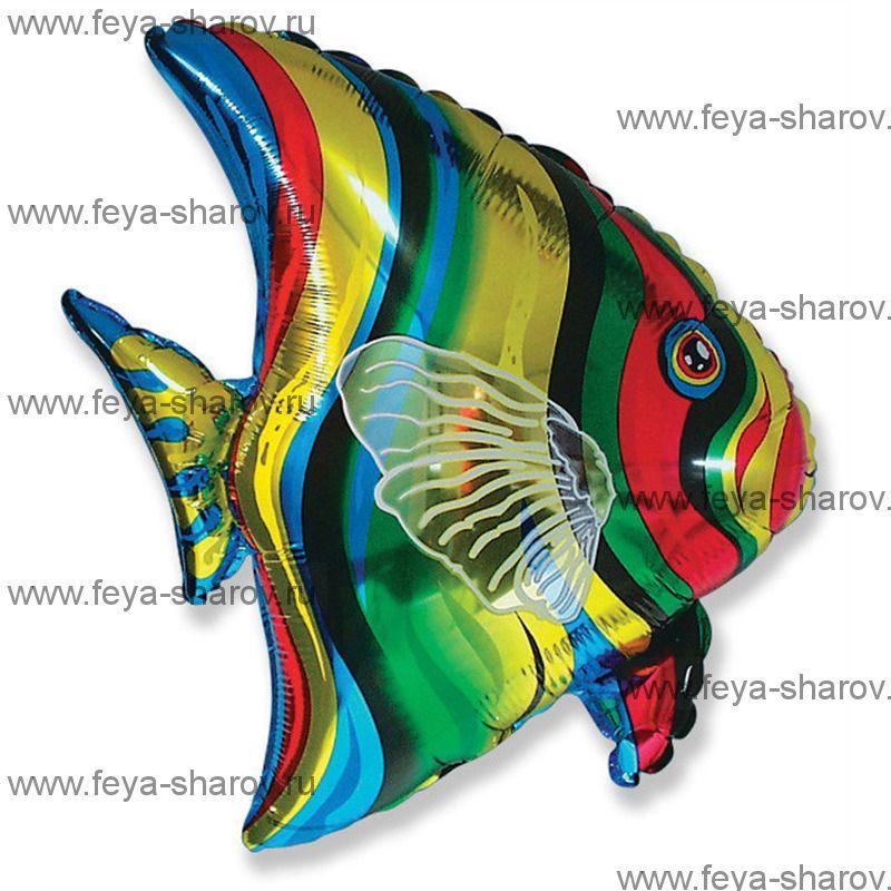 Шар Рыба Тропическая 65х67см