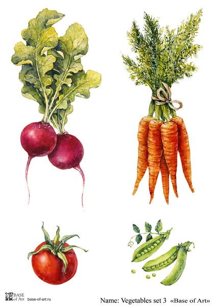 Декупажная карта Base of art, 20*30 см, Vegetables set 3