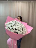 51 ромашковая хризантема в красивой упаковке