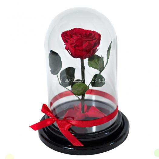 Стабилизированная живая роза в колбе