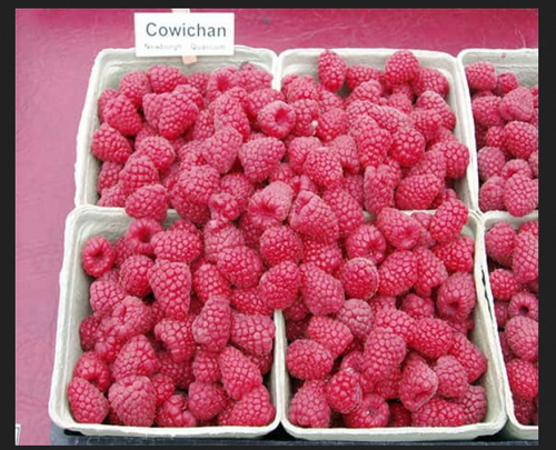 Ковичан малина (Cowichan Raspberry)
