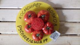 """Томат """"Космонавт Волков"""" (1983 г)"""