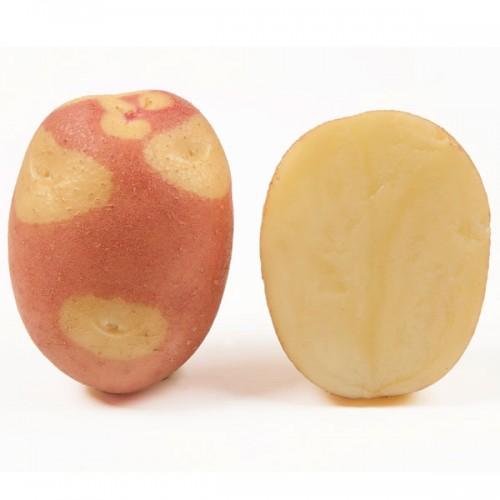 Картофель Бикини 10 шт