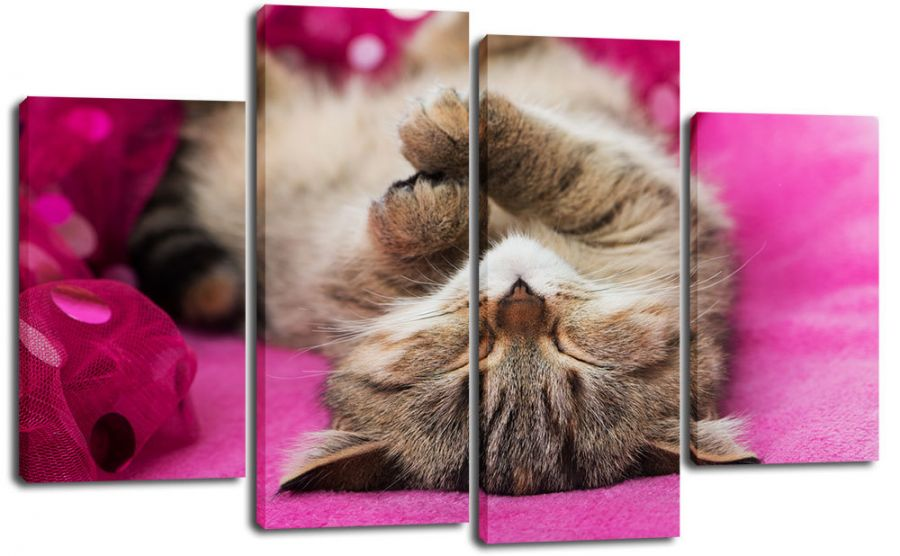 Модульная картина Кошачий сон