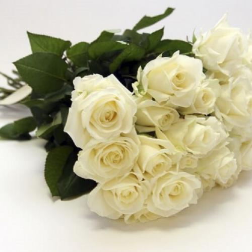 Розы белые российские
